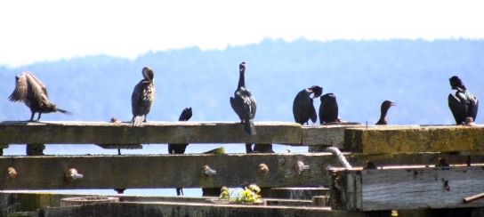 bird on dock plus