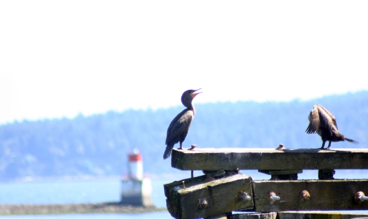 bird on dock