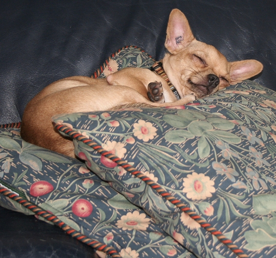 sleeping chihuahua dog pet pillows